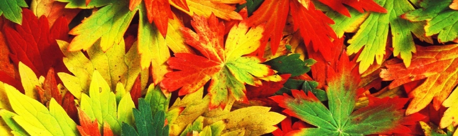 How to stay balanced in Autumn with Ayurveda